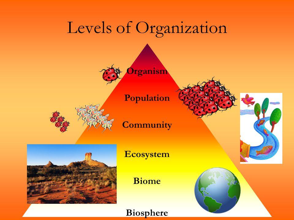 Levels of Organization Organism Population Community Ecosystem Biosphere Biome