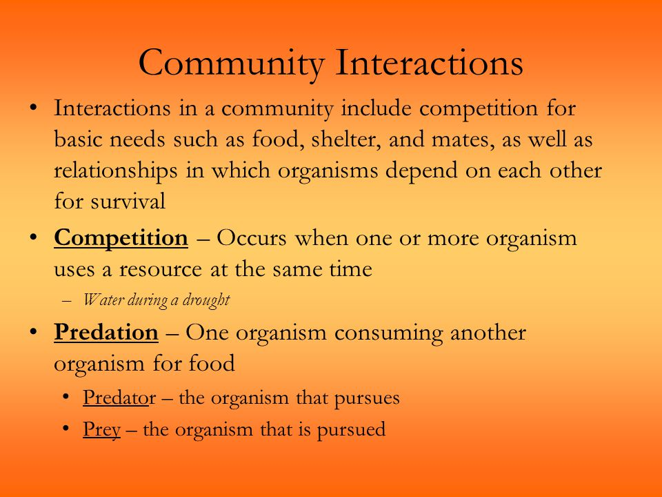 Community Interactions Interactions in a community include competition for basic needs such as food, shelter, and mates, as well as relationships in w