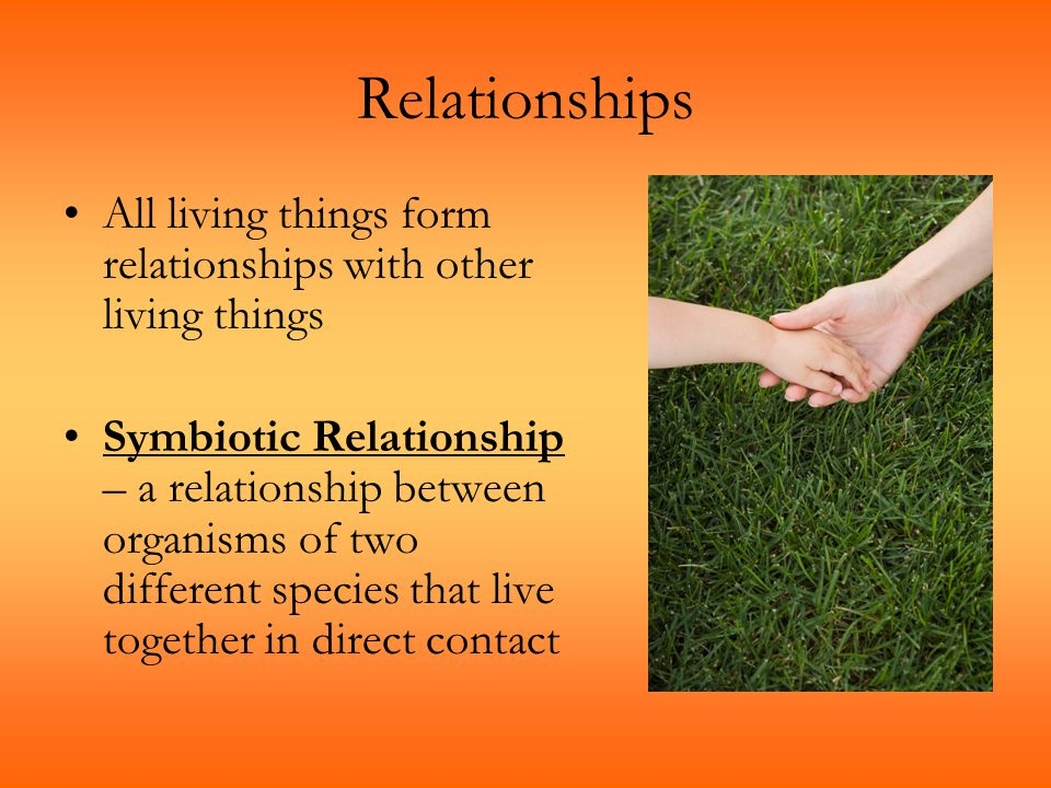 Relationships All living things form relationships with other living things Symbiotic Relationship – a relationship between organisms of two different