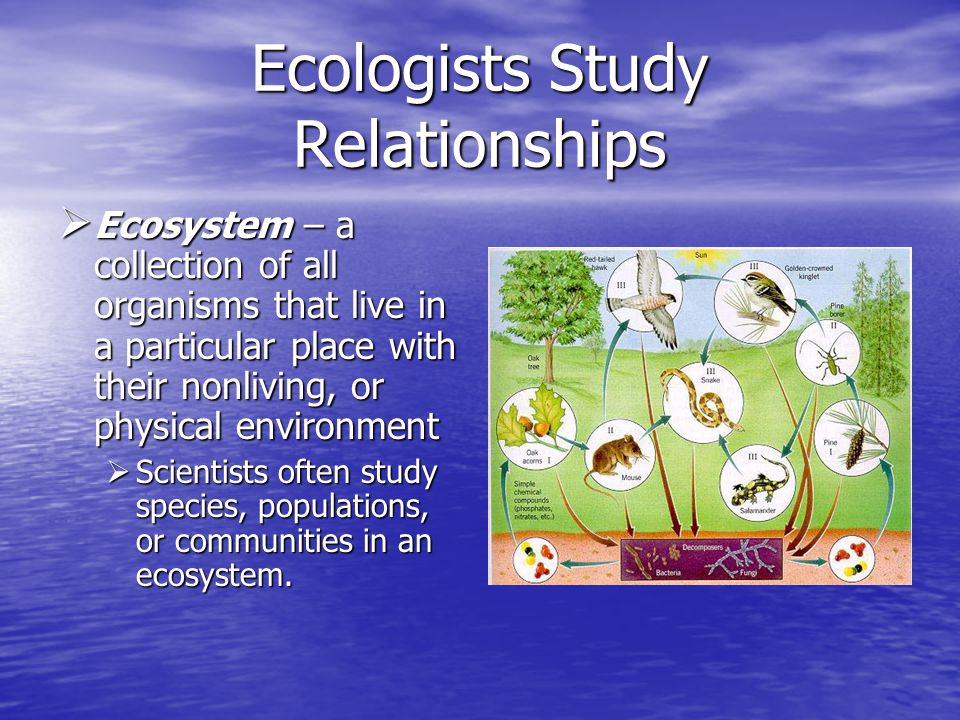 Ecologists Study Relationships Levels of Organization Levels of Organization  Biome – a group of ecosystems that have the same climate and similar dominant communities