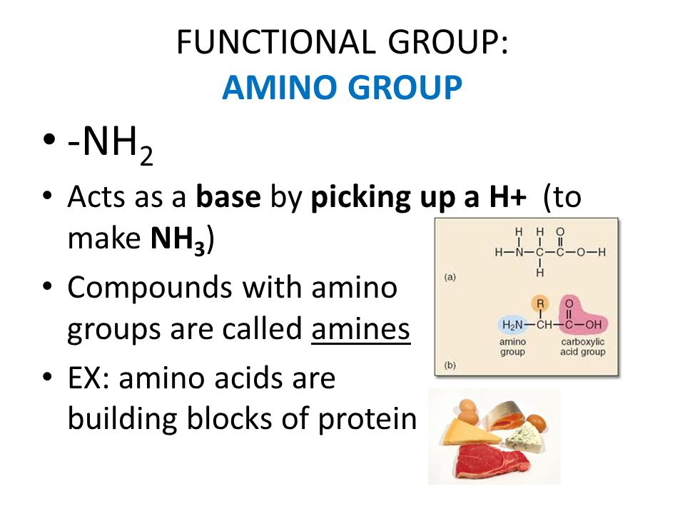 FUNCTIONAL GROUP: AMINO GROUP -NH 2 Acts as a base by picking up a H+ (to make NH 3 ) Compounds with amino groups are called amines EX: amino acids ar
