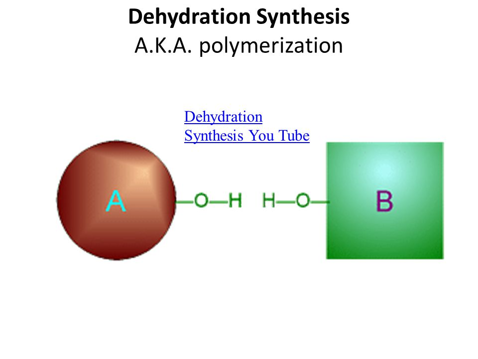 Dehydration Synthesis A.K.A. polymerization Dehydration Synthesis You Tube