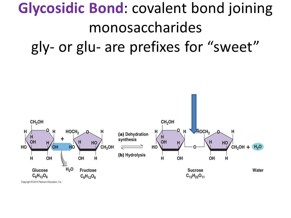 "Glycosidic Bond: covalent bond joining monosaccharides gly- or glu- are prefixes for ""sweet"""