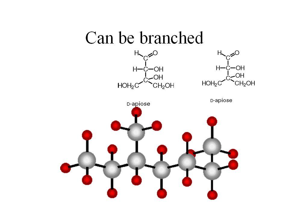 Monomer of Carbohydrates: Monosaccharides Simple sugar -main use in body: fuel EX: glucose – most common galactose –milk sugar fructose – fruit sugar