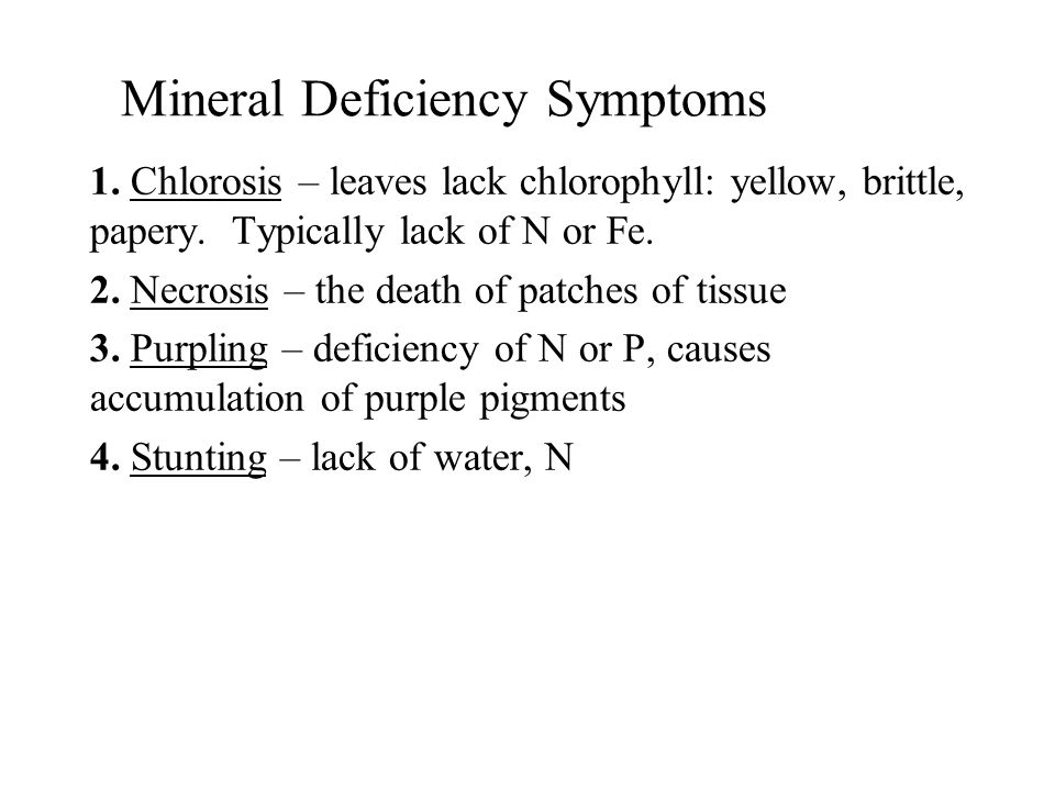Mineral Deficiency Symptoms 1. Chlorosis – leaves lack chlorophyll: yellow, brittle, papery. Typically lack of N or Fe. 2. Necrosis – the death of pat