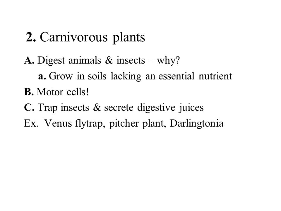 2. Carnivorous plants A. Digest animals & insects – why? a. Grow in soils lacking an essential nutrient B. Motor cells! C. Trap insects & secrete dige