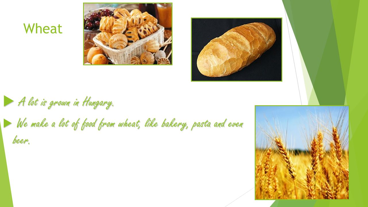 Wheat  A lot is grown in Hungary.