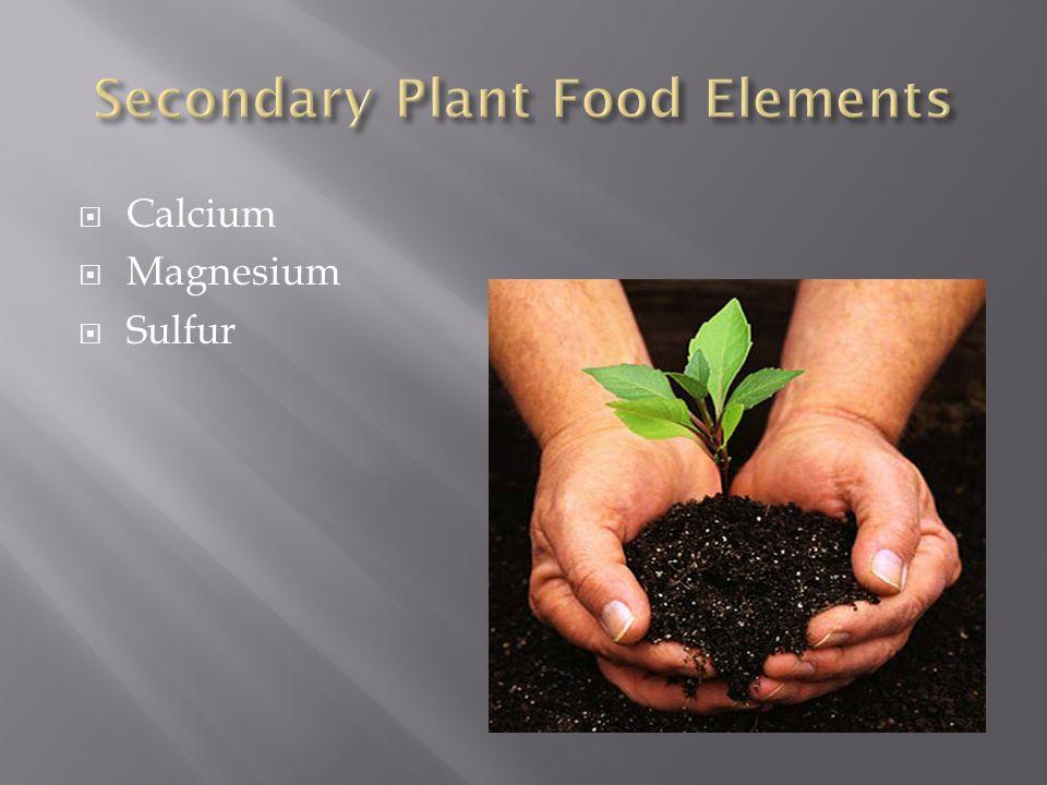  Calcium  Magnesium  Sulfur