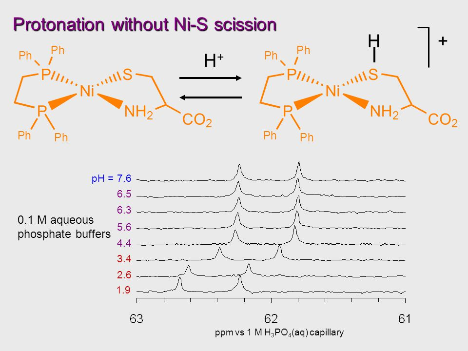 Protonation without Ni-S scission H+H+ H+ 1.9 ppm vs 1 M H 3 PO 4 (aq) capillary 0.1 M aqueous phosphate buffers 2.6 3.4 4.4 5.6 6.3 6.5 pH = 7.6 Ni P PS NH 2 Ph Ph Ph Ph CO 2 Ni P PS NH 2 Ph Ph Ph Ph CO 2