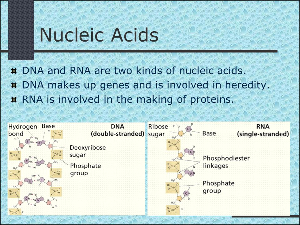 Nucleic Acids DNA and RNA are two kinds of nucleic acids.