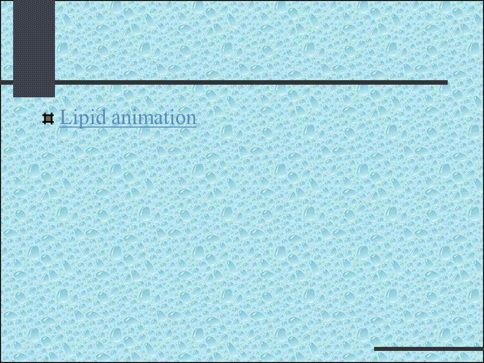 Lipid animation