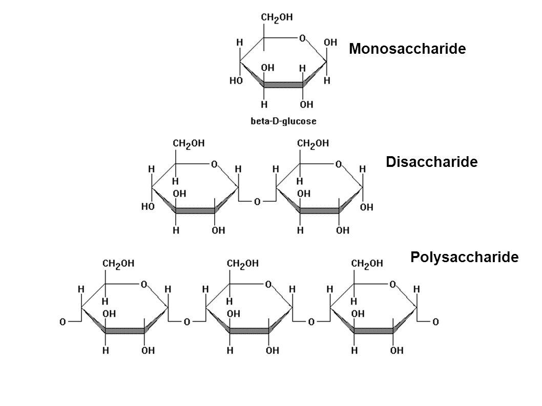 Monosaccharide Disaccharide Polysaccharide