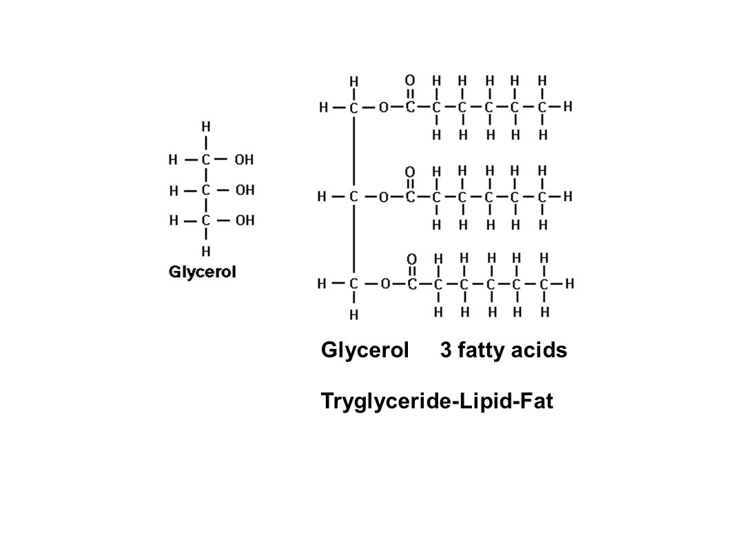 Glycerol 3 fatty acids Tryglyceride-Lipid-Fat