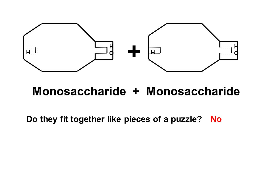 H HOHO H HOHO + Monosaccharide + Monosaccharide Do they fit together like pieces of a puzzle? No