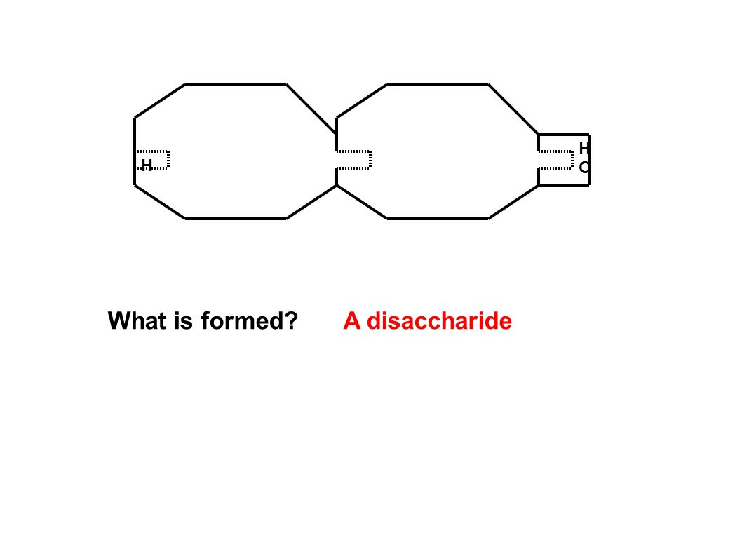 H HOHO What is formed?A disaccharide