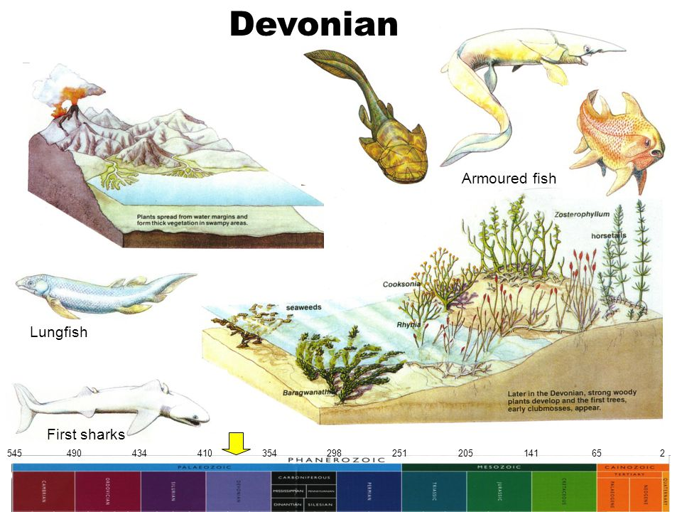 545 490 434 410 354 298 251 205 141 65 2 Devonian Lungfish First sharks Armoured fish