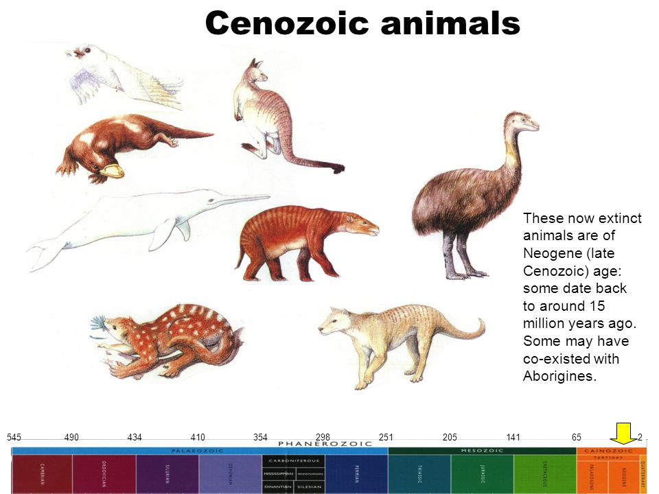545 490 434 410 354 298 251 205 141 65 2 Cenozoic animals These now extinct animals are of Neogene (late Cenozoic) age: some date back to around 15 mi