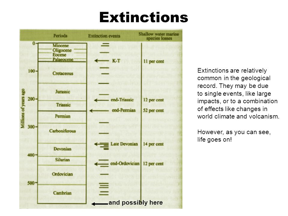 Extinctions and possibly here Extinctions are relatively common in the geological record. They may be due to single events, like large impacts, or to