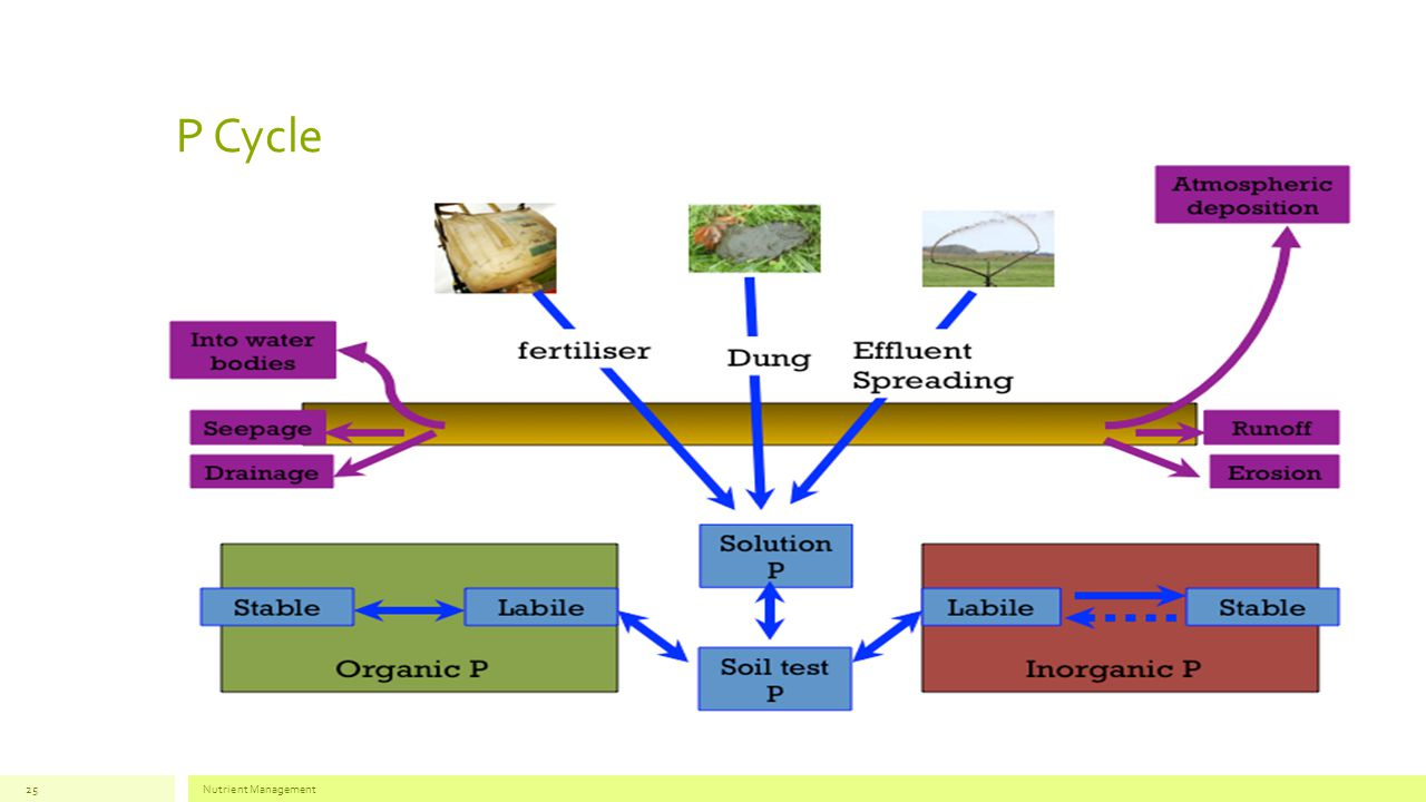 P Cycle Nutrient Management25