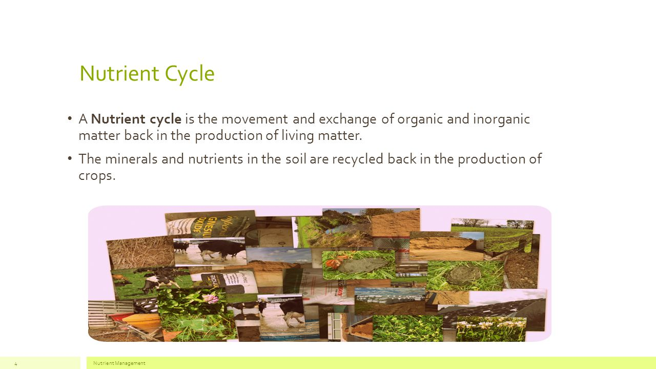 Nutrient Cycle A Nutrient cycle is the movement and exchange of organic and inorganic matter back in the production of living matter.
