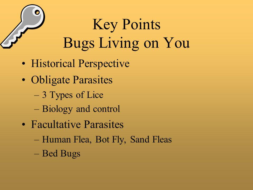 Bugs On You Demodex follicularum the human follicle mite