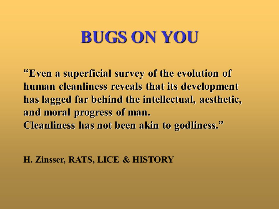 Body Louse P.h.humanus –Latin: Pedis - louse; Pediculus = small louse –English: Pedicular, an adj.