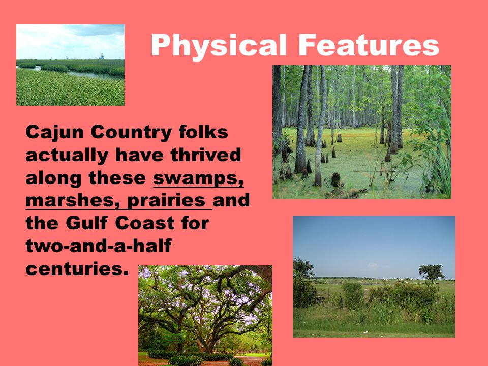 Physical Features Cajun Country folks actually have thrived along these swamps, marshes, prairies and the Gulf Coast for two-and-a-half centuries.