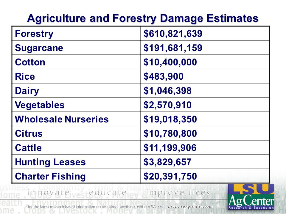 Agriculture and Forestry Damage Estimates Forestry$610,821,639 Sugarcane$191,681,159 Cotton$10,400,000 Rice$483,900 Dairy$1,046,398 Vegetables$2,570,910 Wholesale Nurseries$19,018,350 Citrus$10,780,800 Cattle$11,199,906 Hunting Leases$3,829,657 Charter Fishing$20,391,750