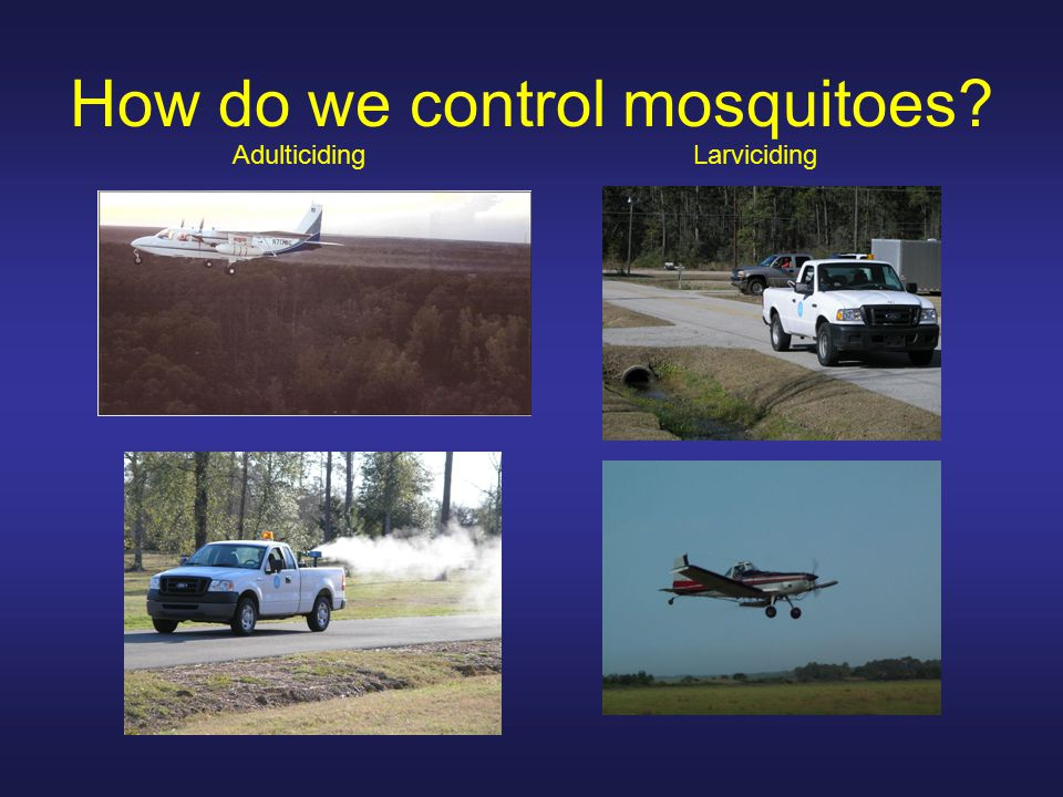 How do we control mosquitoes AdulticidingLarviciding