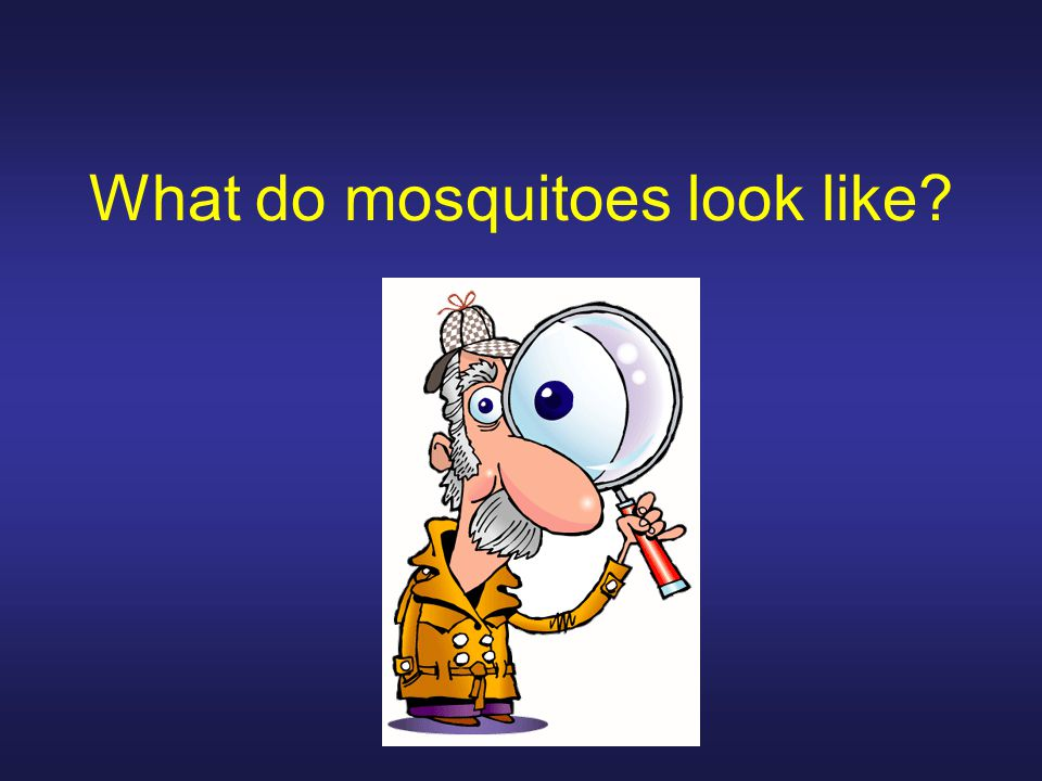 What do mosquitoes look like