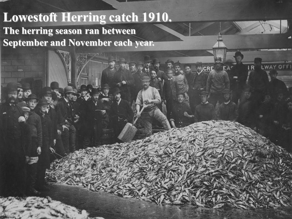 Lowestoft Herring catch 1910. The herring season ran between September and November each year.
