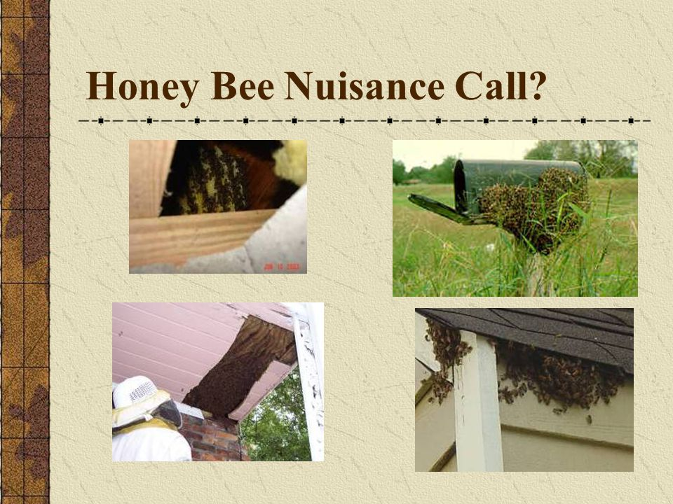 Honey Bee Nuisance Call?
