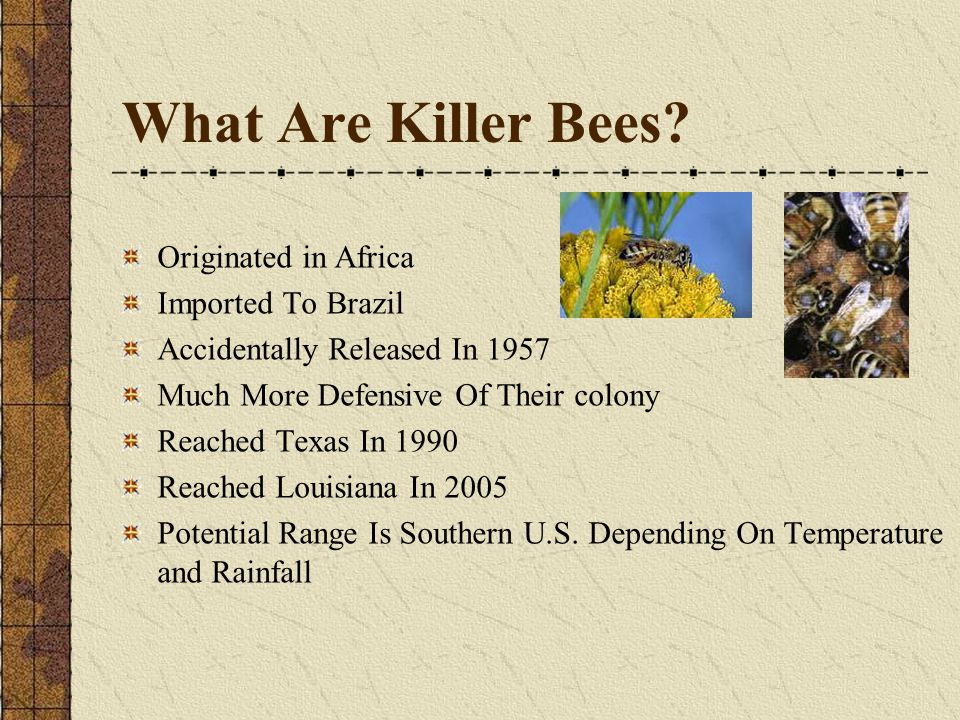 What Are Killer Bees.