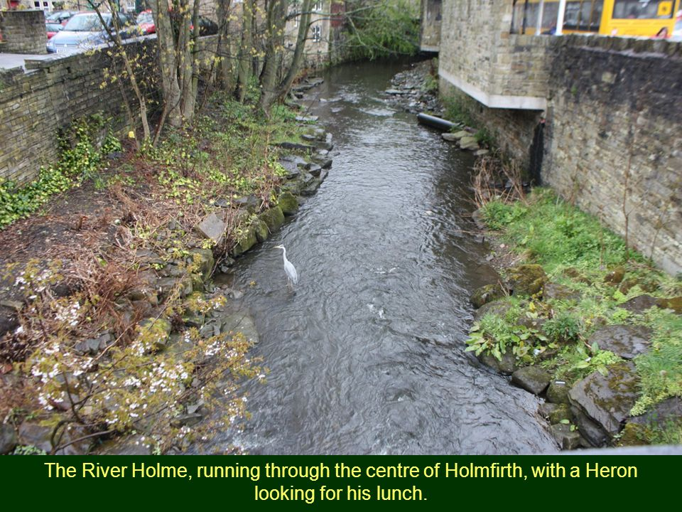The River Holme, running through the centre of Holmfirth, with a Heron looking for his lunch.