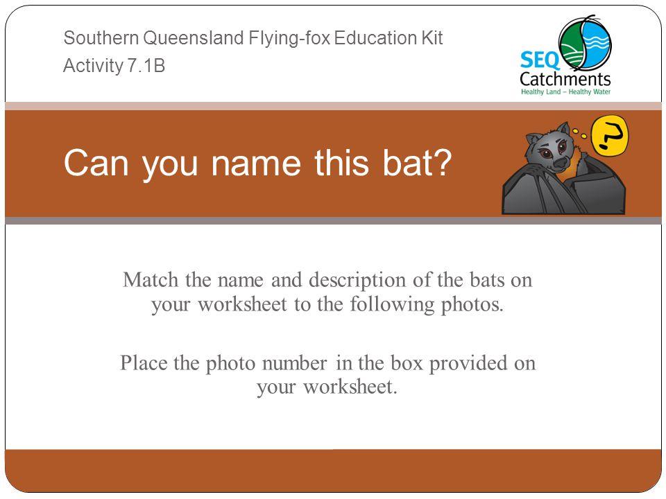 Southern Queensland Flying-fox Education Kit :: Activity 7.1B Mega-bat 1 Photo: Les Hall