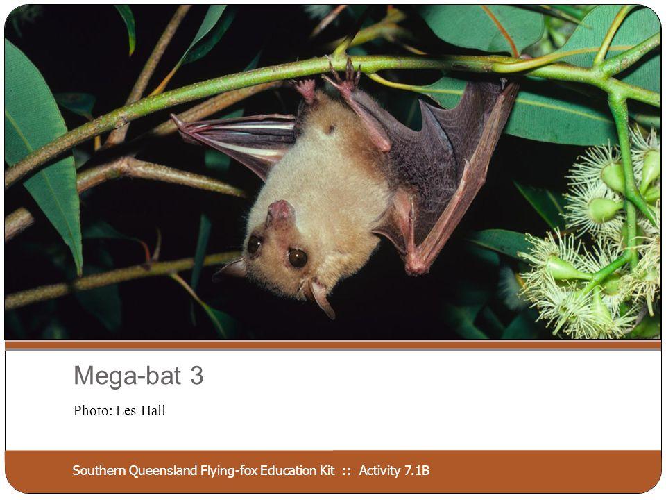 Southern Queensland Flying-fox Education Kit :: Activity 7.1B Mega-bat 4 Photo: Les Hall