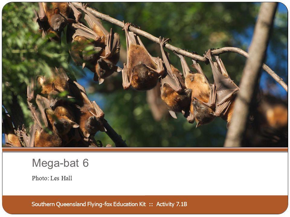 Southern Queensland Flying-fox Education Kit :: Activity 7.1B Mega-bat 7 Photo: Bruce Thompson