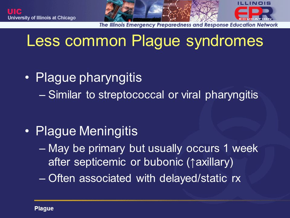 Less common Plague syndromes Plague pharyngitis –Similar to streptococcal or viral pharyngitis Plague Meningitis –May be primary but usually occurs 1 week after septicemic or bubonic (↑axillary) –Often associated with delayed/static rx