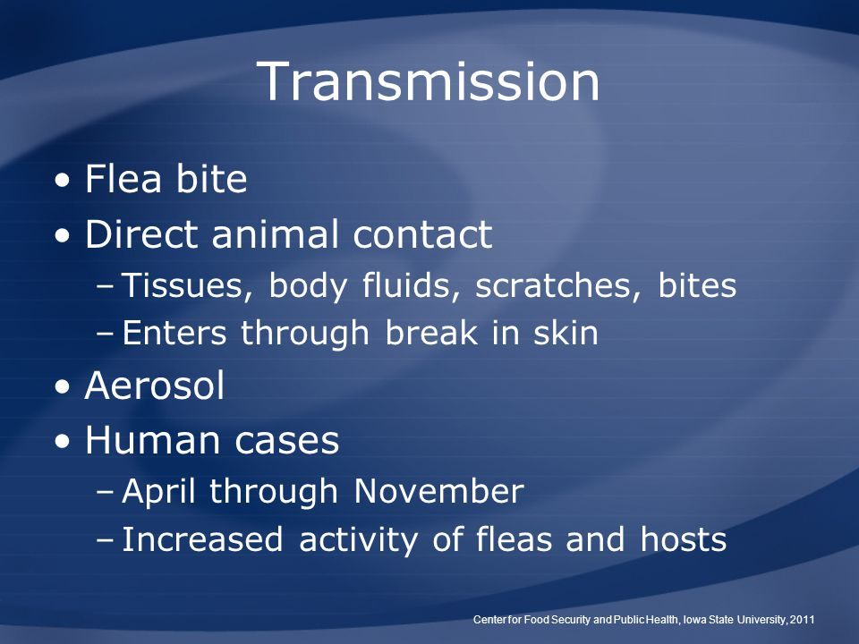 Flea bite Direct animal contact –Tissues, body fluids, scratches, bites –Enters through break in skin Aerosol Human cases –April through November –Inc
