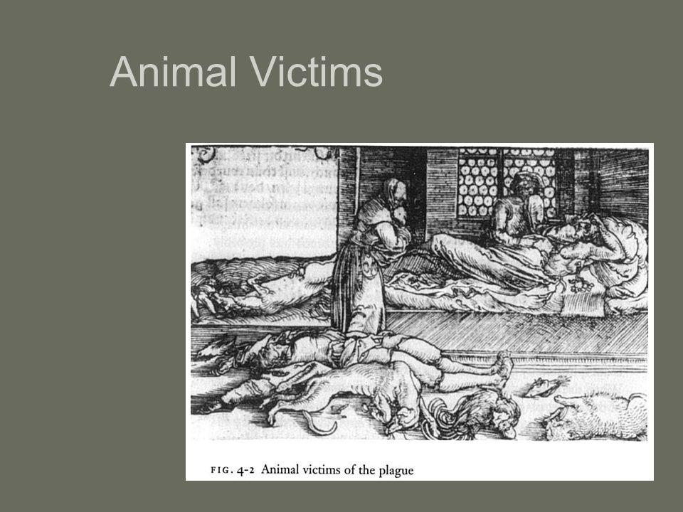Animal Victims