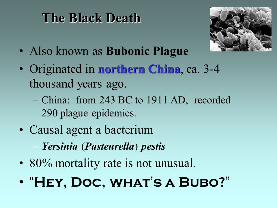 The Black Death Also known as Bubonic Plague northern ChinaOriginated in northern China, ca.