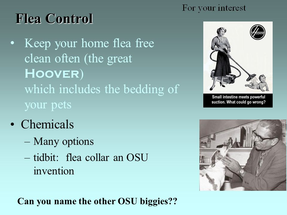 Flea Control Chemicals –Many options –tidbit: flea collar an OSU invention Can you name the other OSU biggies .