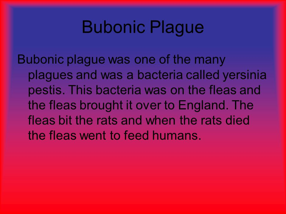 Bubonic Plague Bubonic plague was one of the many plagues and was a bacteria called yersinia pestis.