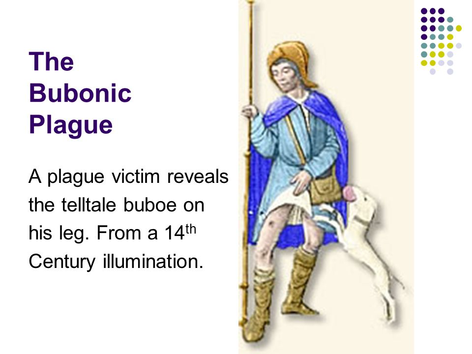 The Bubonic Plague A plague victim reveals the telltale buboe on his leg. From a 14 th Century illumination.