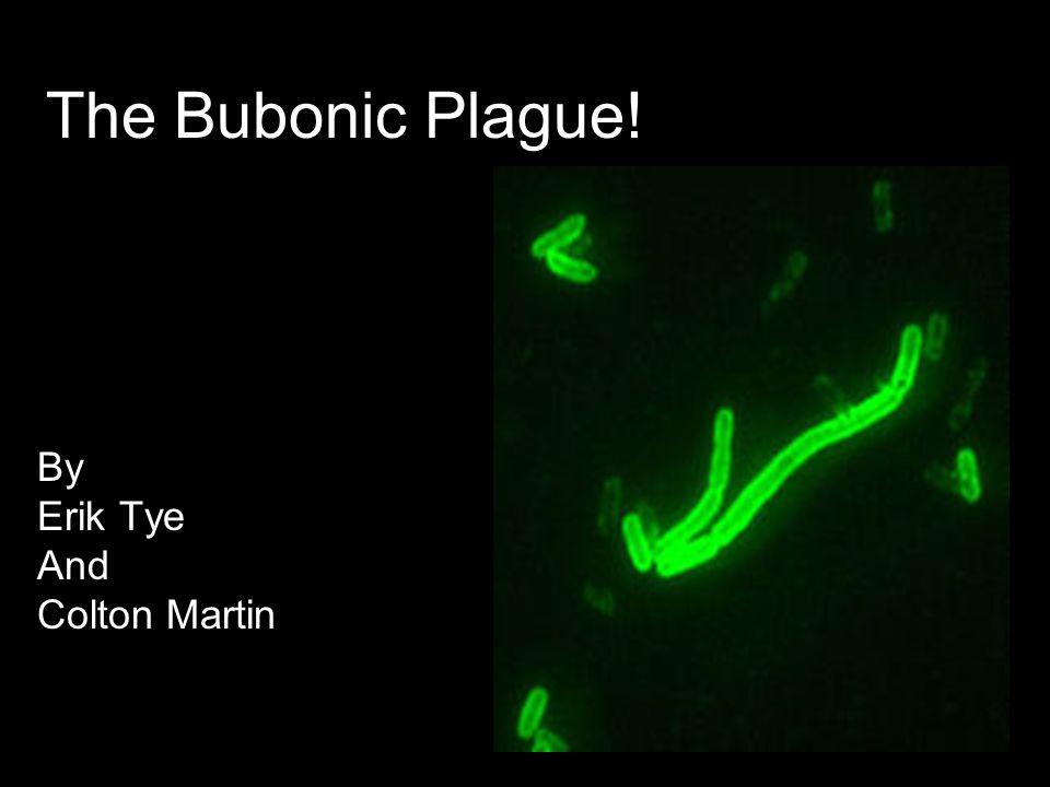 The Bubonic Plague! By Erik Tye And Colton Martin