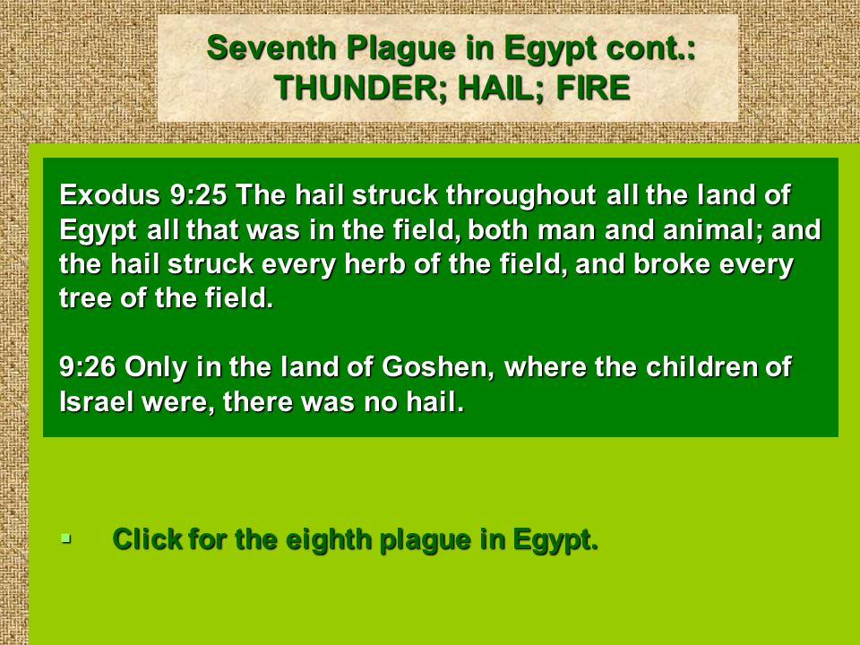 Seventh Plague in Egypt cont.: THUNDER; HAIL; FIRE Exodus 9:25 The hail struck throughout all the land of Egypt all that was in the field, both man and animal; and the hail struck every herb of the field, and broke every tree of the field.