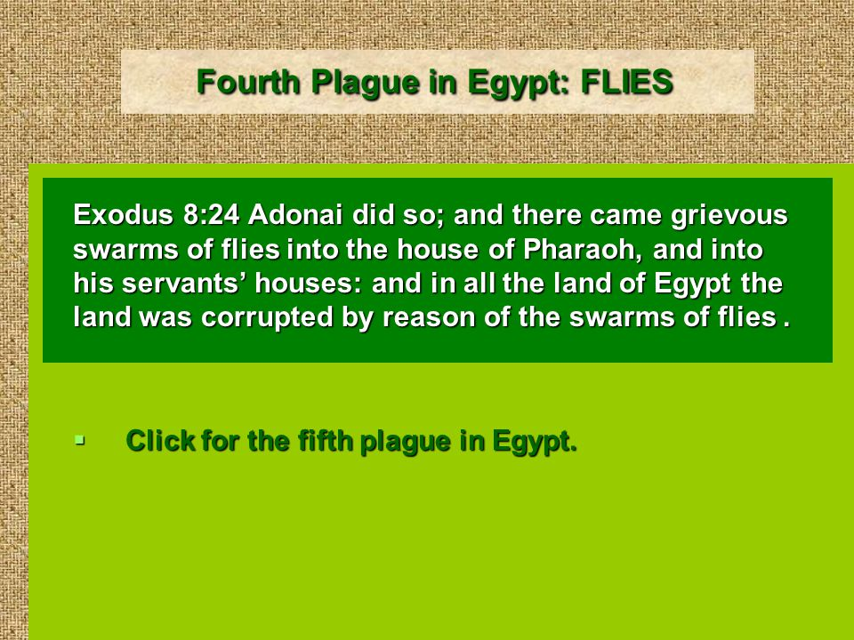 Fourth Plague in Egypt: FLIES Exodus 8:24 Adonai did so; and there came grievous swarms of flies into the house of Pharaoh, and into his servants' houses: and in all the land of Egypt the land was corrupted by reason of the swarms of flies.