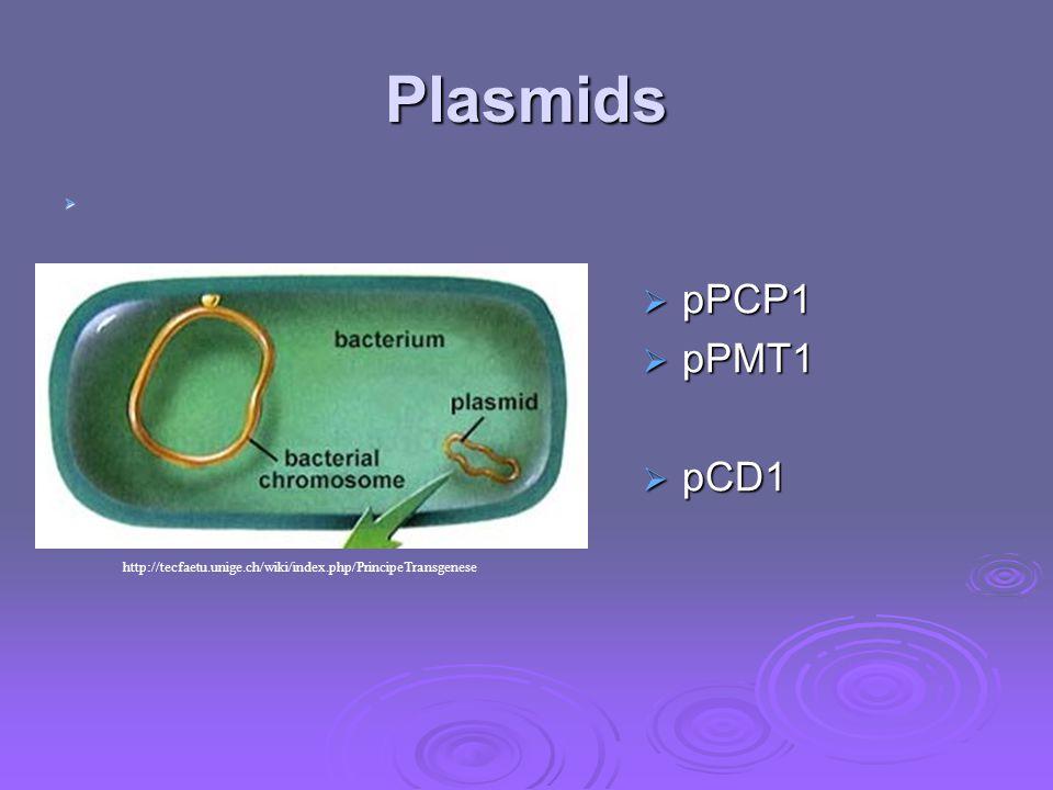 Plasmids   pPCP1  pPMT1  pCD1 http://tecfaetu.unige.ch/wiki/index.php/PrincipeTransgenese