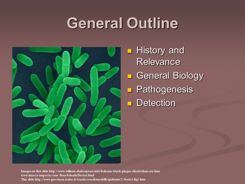 General Outline History and Relevance General Biology Pathogenesis Detection Images on first slide:http://www.william-shakespeare.info/bubonic-black-plague-elizabethan-era.htm www.insecta-inspecta.com/ fleas/bdeath/Doctor.html This slide:http://www.provincia.torino.it/scuola/cesedi/modelli/epidemie/2.4testo1fig1.htm