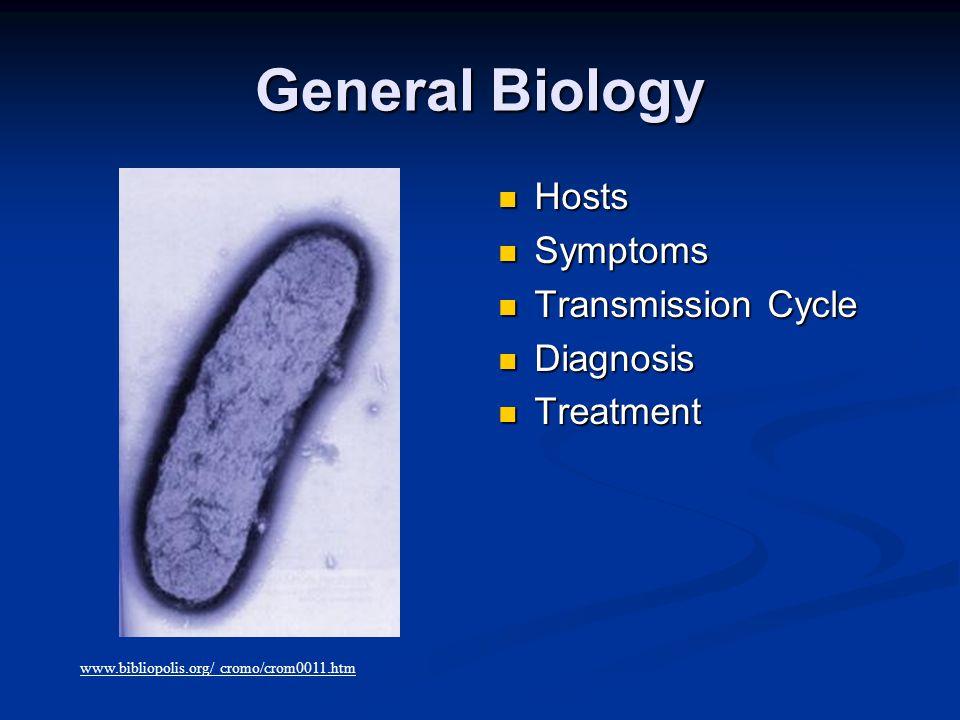 Virulence Factors  Invasins  Tyrosine Phosphatase http://www.jbc.org/cgi/content/full/280/11/10388